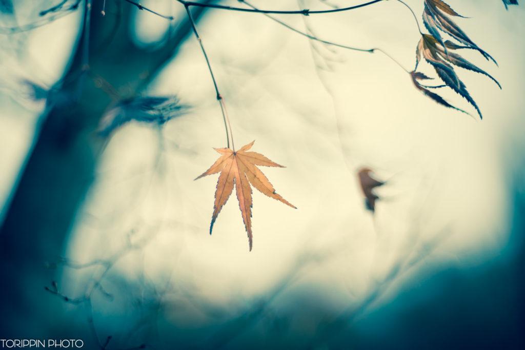 「最後の葉っぱ」の画像