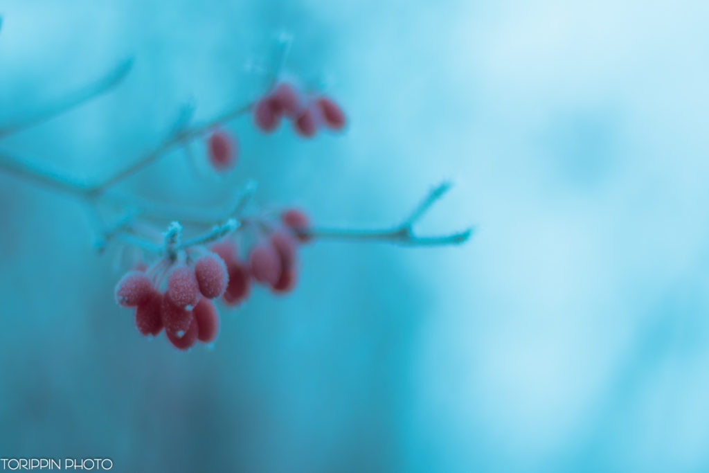 インスタ投稿画像「木の実」