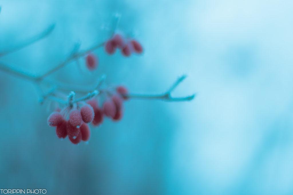 「氷点下の木の実」の画像
