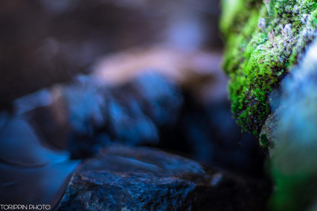 フォクトレンダー NOKTON 58mm F1.4 SLIIの作例「川辺の苔」