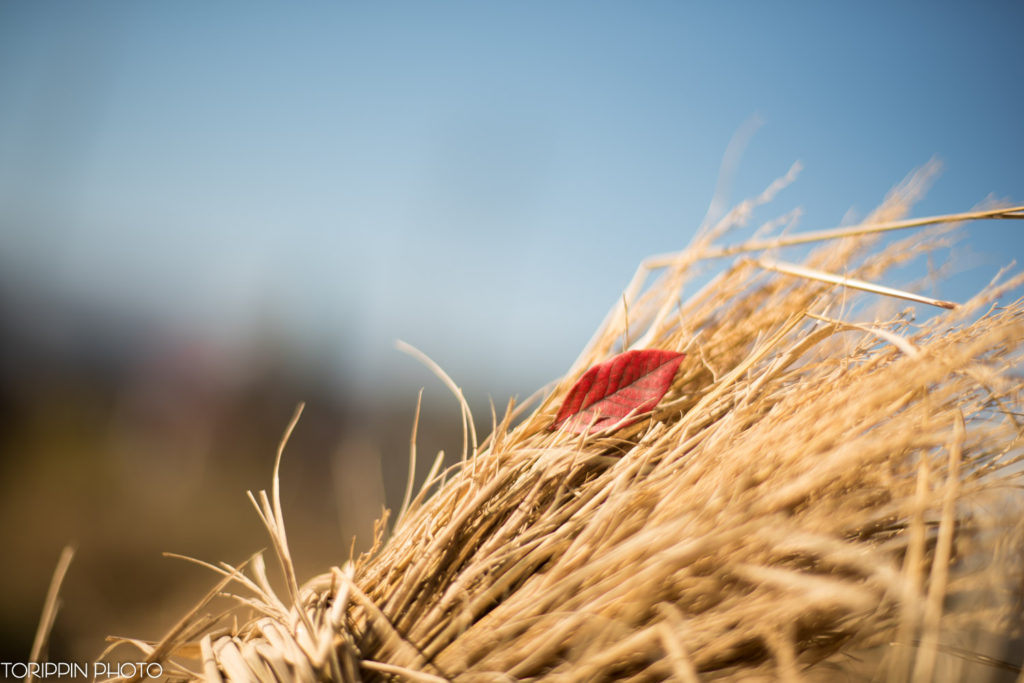 「藁と紅葉」の画像