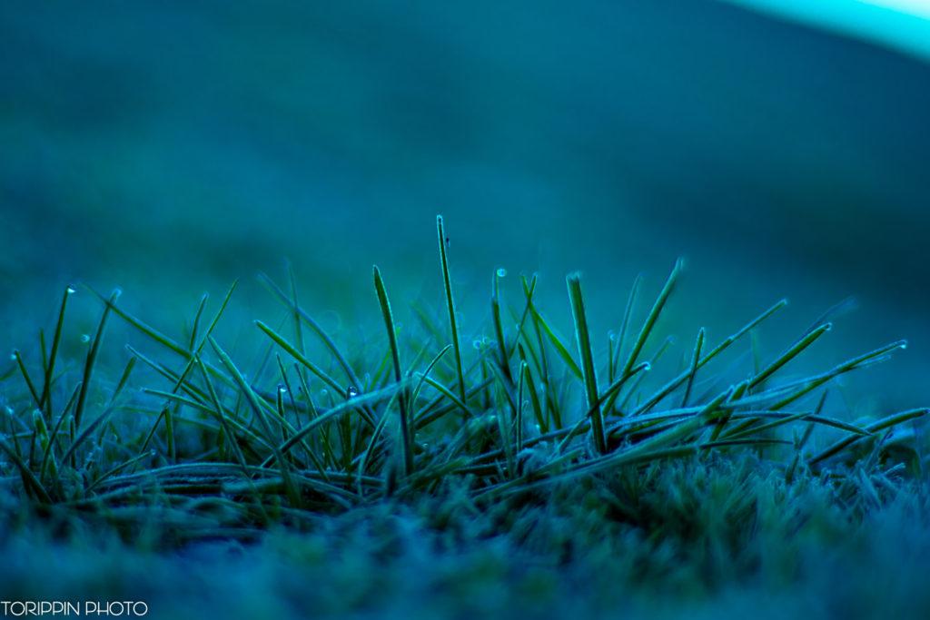「朝露と草」の画像