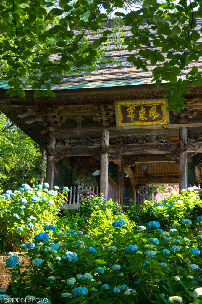 α7ⅡとSEL70200Gで撮影した高源院(あじさい寺)と紫陽花たち