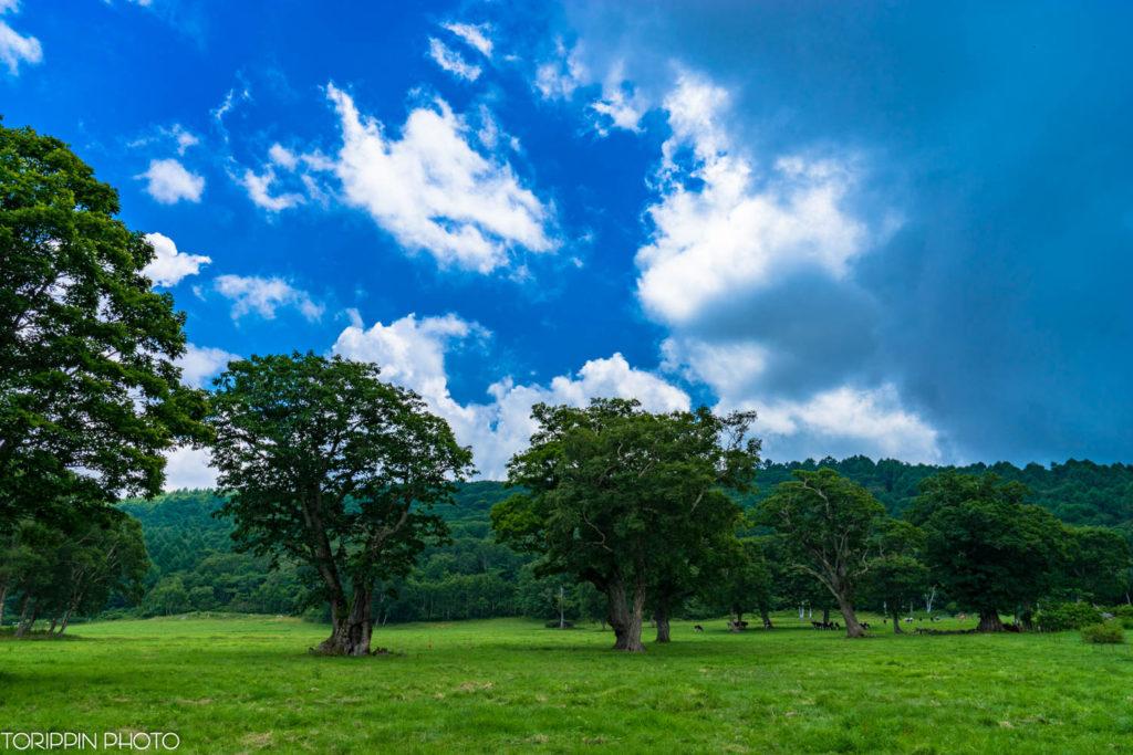 広角レンズSAL24F20Zで牧場を撮りました