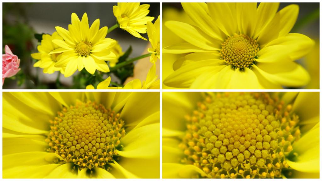 STFレンズ(SAL135F28)で花の接写テスト