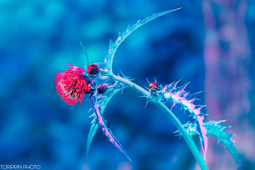 葉がギザギザの花